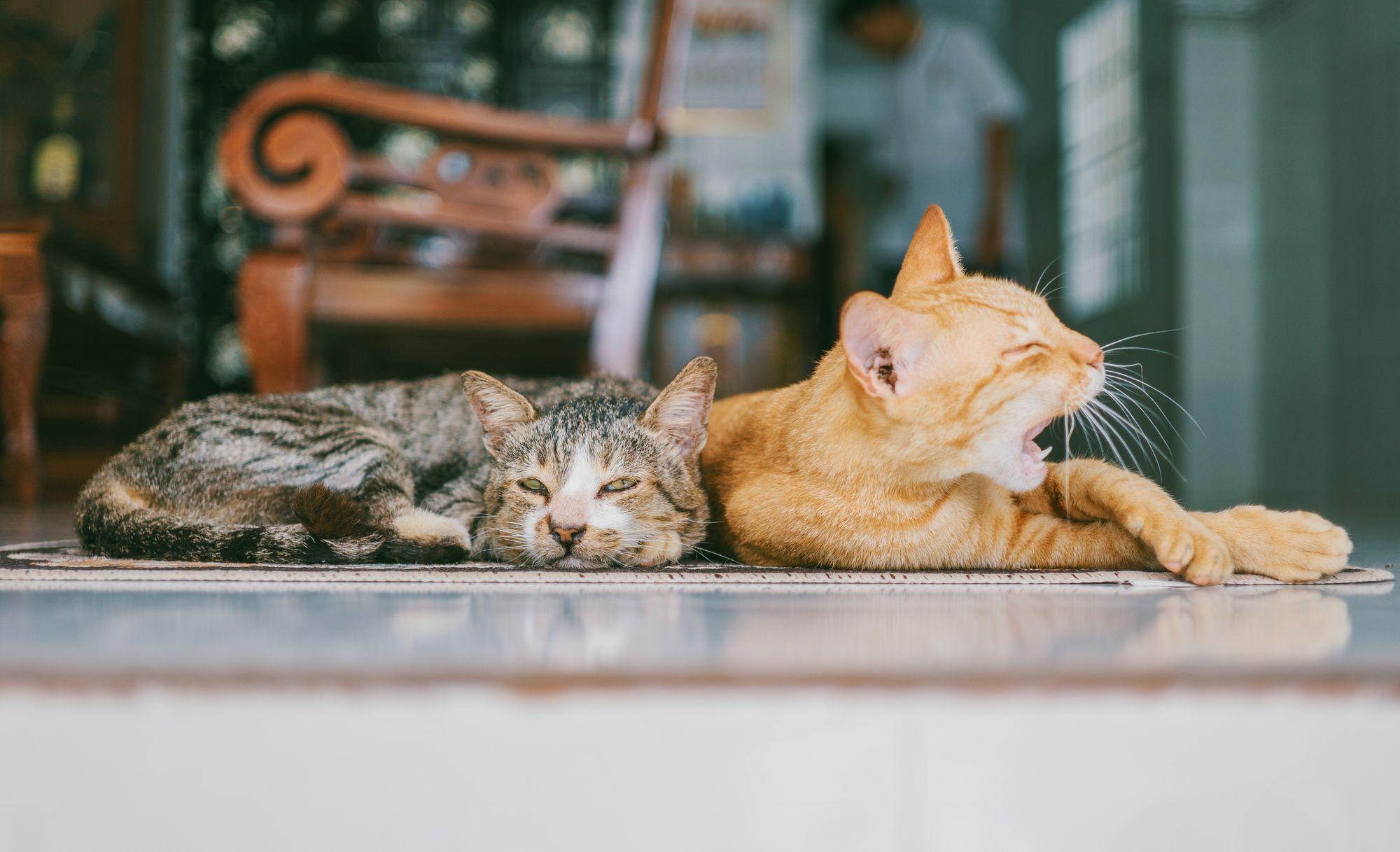 Opieka nad zwierzakiem z adopcji