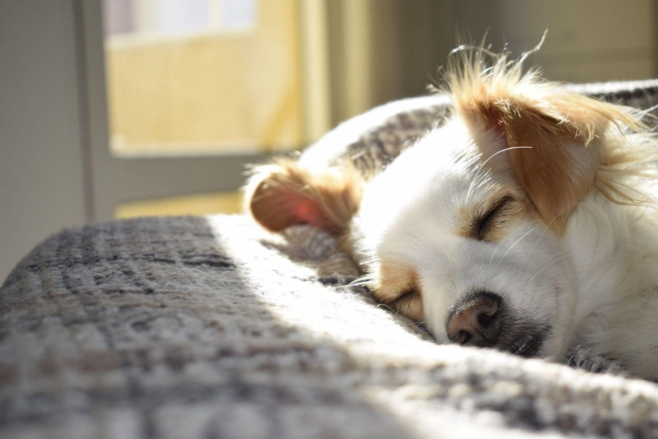 Wybór odpowiedniego legowiska dla Twojego psa