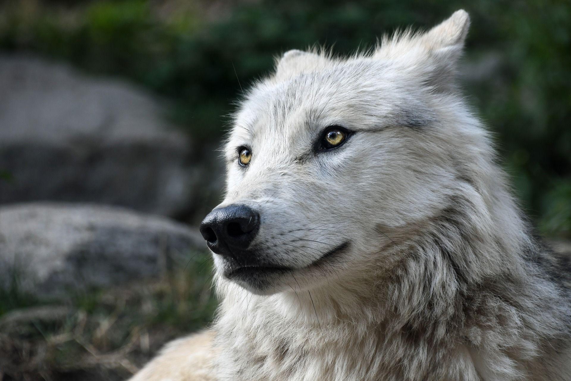 Mój pies stał się agresywny – co robić?