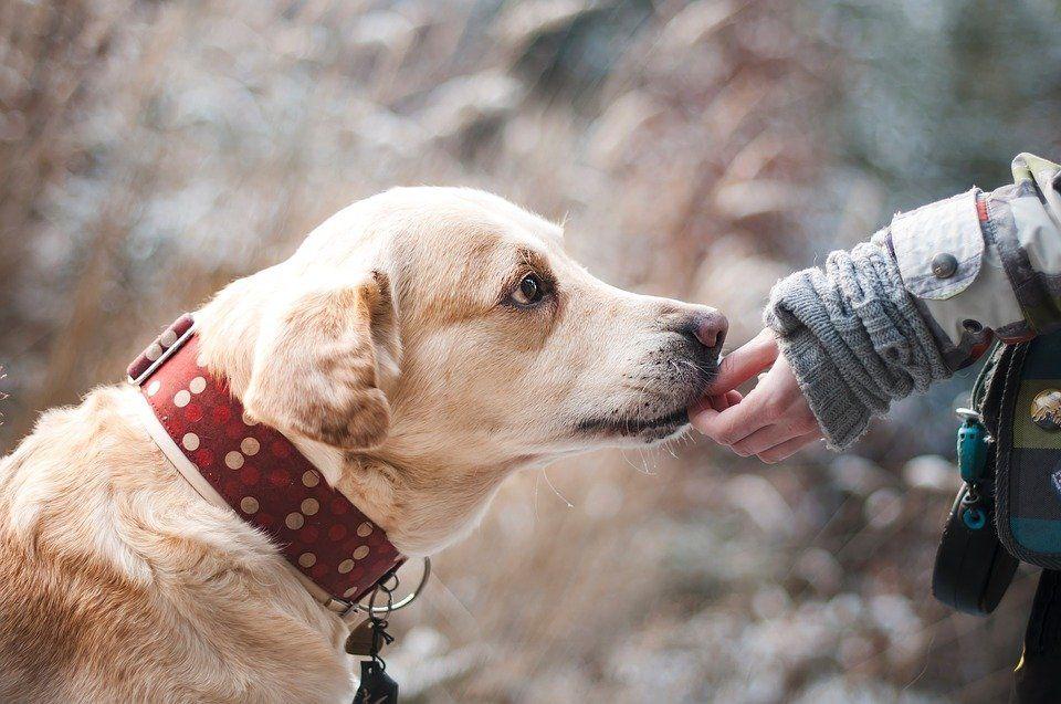 Jak zadbać o swojego psa?