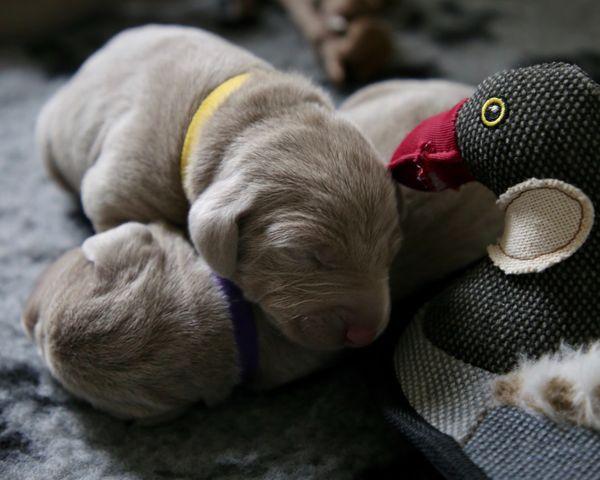 Mały psiak lub kot w domu