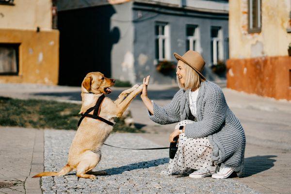 Jak uszczęśliwić psa?