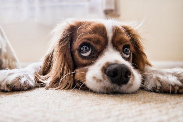 Jak szkolić psy?