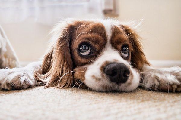 Jak wychować nawet nieposłusznego psa?